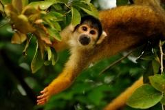 Bolivia - Santa Rosa de Yacuma - monkey 6