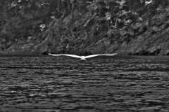 Bolivia - Santa Rosa de Yacuma - bird 12
