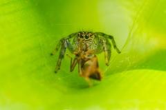 Bolivia - Coroico - spider 22