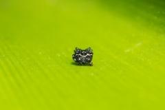Bolivia - Coroico - spider 21