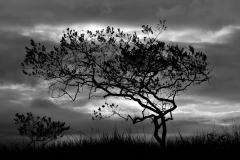 Bolivia - Sorata - Mapiri - trail - tree 24