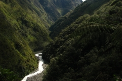 Bolivia - Yungas - valley 20