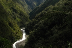 Bolivia - Yungas - valley 19